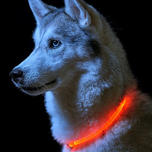 AGIA TEX Hunde-LED-Leuchthalsband für maximale Sicherheit in Dunkelheit | Hundehalsband Leuchtend | individuell kürzbar, per USB aufladbar & wasserfest |inkl. USB Ladekabel in Farbe rot