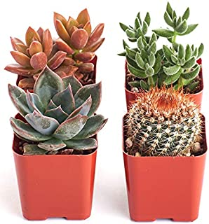 Best cactus color palette Reviews