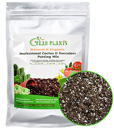 Organic Succulent and Cactus Soil Mix, Professional Potting Soil Fast Drainage Pre-Mixed Blend, Garden Soil for Indoor Plants, Aloe Vera, Snake Plant, Spider Plant, Herbs, Houseplants, 2 Quarts