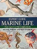 Expert Guide: Marine Life
