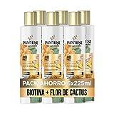 Pantene Pro-V Miracles Adiós Frizz Champú | Con Biotina, Extracto De Cactus Y Aceite De Argán | Para Pelo Encrespado, 6 x 225ml