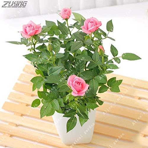 HONIC 100pcs Mini Rose Bonsai Miniatur-Rose Eine kleine süße Pflanzen für Miniatur-Gartenpflanze Topf Baby-Geschenk Blumen: 2
