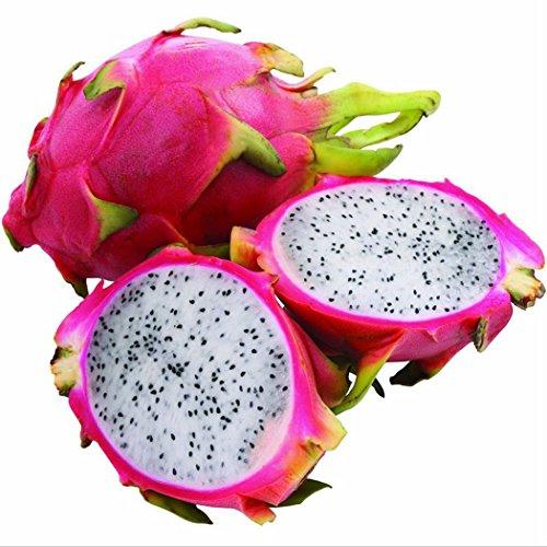 Ncient 30 pcs/Sac Graines Semences de Pitaya Fruits du Dragon Vivace Graines de Fruits Graines à Planter Plante Rare de Jardin Balcon Bonsaï en Plein Air pour l'Intérieur et l'Extérieur (Blanc)