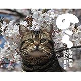 2021猫カレンダー のら ([カレンダー])