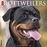 Just Rottweilers 2020 Wall Calendar (Dog Breed Calendar)