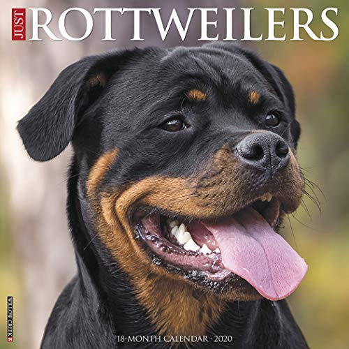 Just Rottweilers 2020 Wall Calendar (Dog Breed Calendar)
