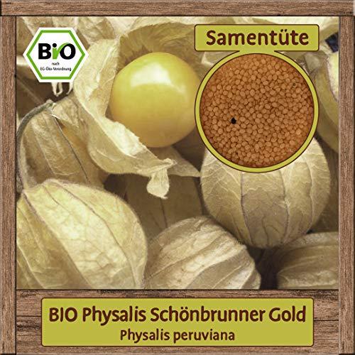 Samenliebe BIO Gemüse Samen Physalis Schönbrunner Gold (Physalis peruviana) | BIO Physalissamen Gemüsesamen | BIO Saatgut für 12 Pflanzen