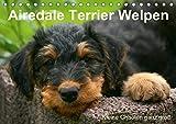 Airedale Terrier Welpen (Tischkalender 2020 DIN A5 quer)