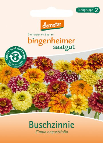 Buschzinnie Blumen Saatgut