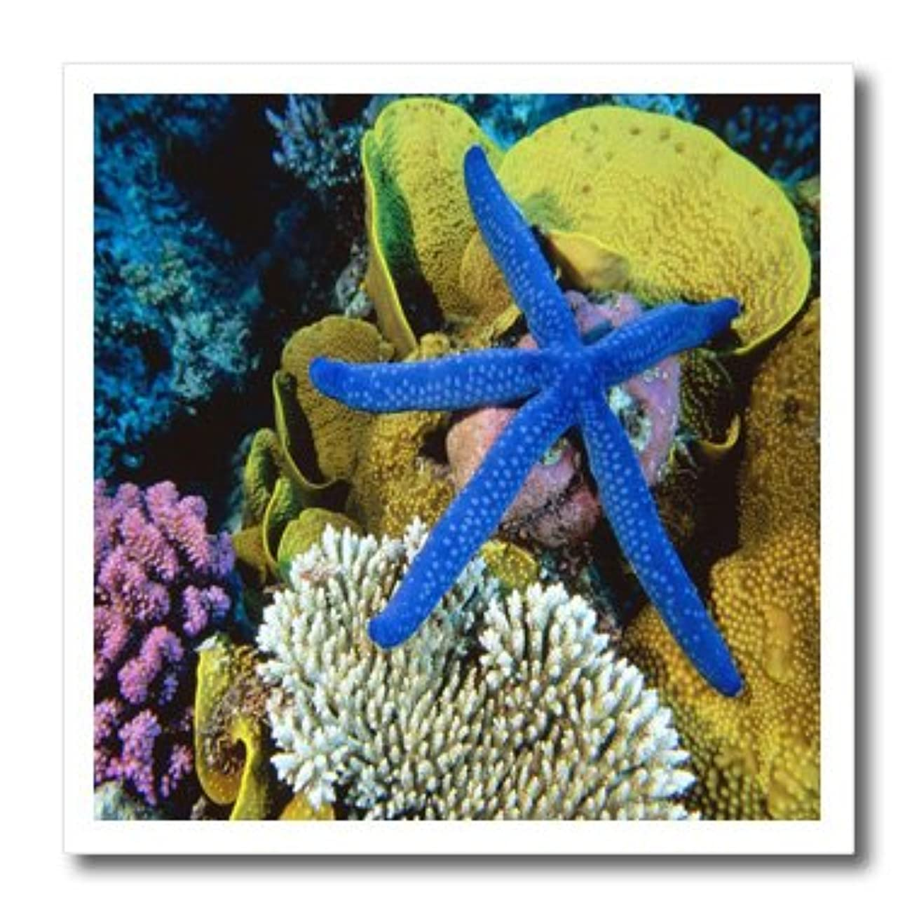 3dRose ht_80686_2 Blue Starfish at Great Barrier Reef Austrailia Iron on Heat Transfer, 6 by 6-Inch