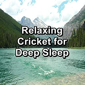 Relaxing Cricket for Deep Sleep