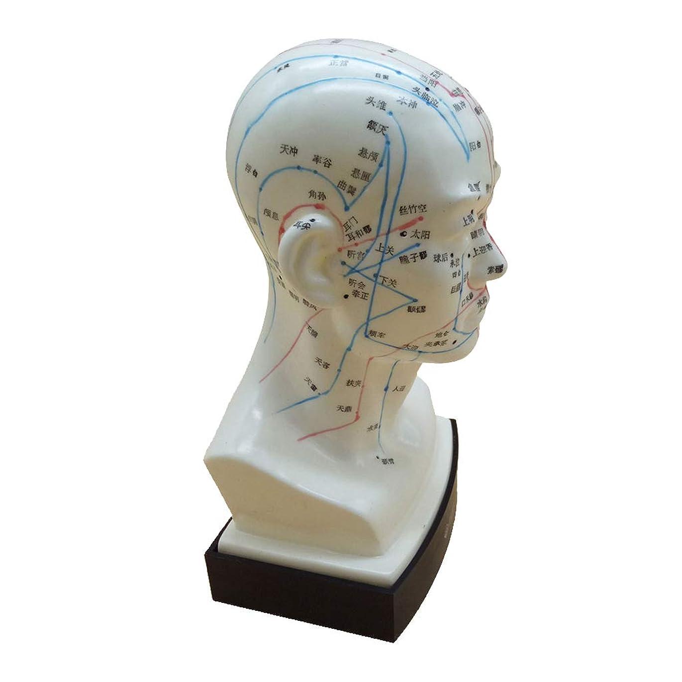 着替えるマイル橋脚KESOTO マッサージ モデル 中国語 指圧ポイント 人間の頭 経絡モデル