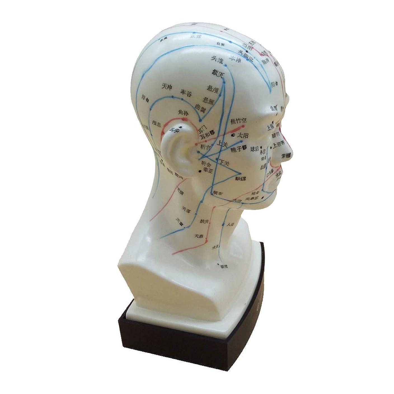 不規則性立ち寄る引き出しKESOTO マッサージ モデル 中国語 指圧ポイント 人間の頭 経絡モデル