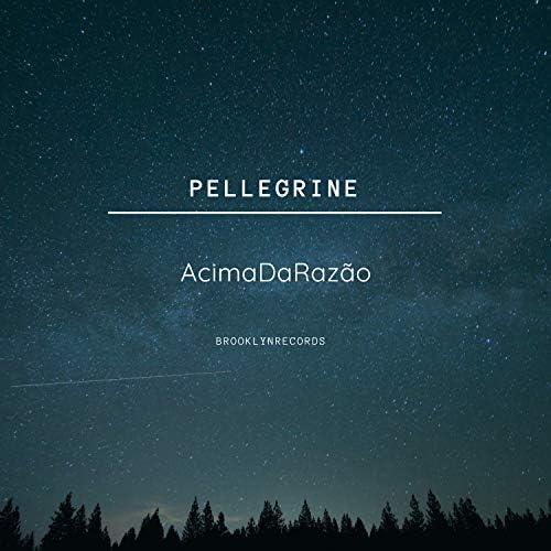 Pellegrine