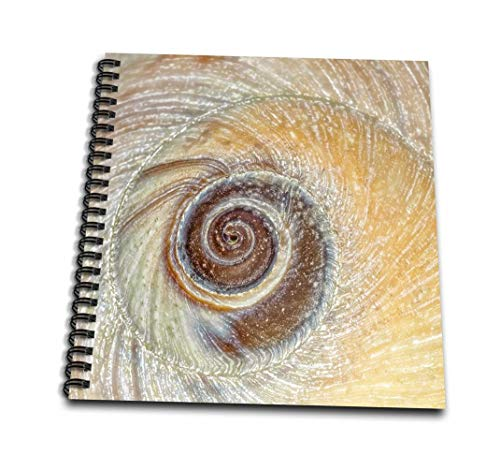 3dRose USA, Washington, Seabeck. Close-Up of Moon Snail Shell.-Memory Book, 12 by 12' (db_190957_2)