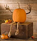 "Plow & Hearth 65A44 Pumpkin Vine Arms and Legs Indoor Outdoor Halloween Decoration, 16.5"" x 2.5"""