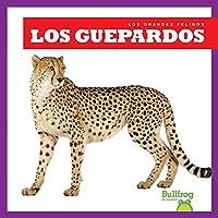 Los guepardos/ Cheetahs (Los Grandes Felinos/ Big Cats)
