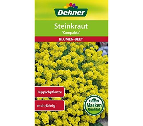 Dehner Blumen-Saatgut, Steinkraut,