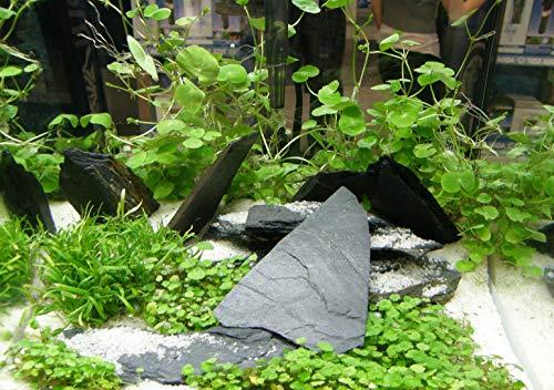 150 Wasserpflanzen XXL Set, Dünger, Aufbereiter - 4