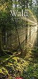 Im Wald - Kalender 2021 - Weingarten-Verlag - Fotokalender im Vertikalformat - Wandkalender mit wundervollen Naturfotos - 29,8 cm x 67,8 cm