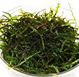 Our Recommended Live Java Moss