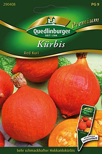 Kürbis Red Kuri von Quedlinburger Saatgut