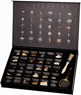 30 Pieces Paleontological Fossil Educational Collection Creative Gift Home Decorations with High-End Gift Box Packaging