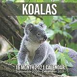 Koalas 16 Month 2021 Calendar September 2020-December 2021: Australian Koala Bear Square Photo Book Monthly Pages 8.5 x 8.5 Inch