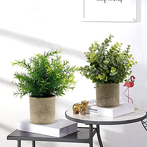GaoTuo Plantas