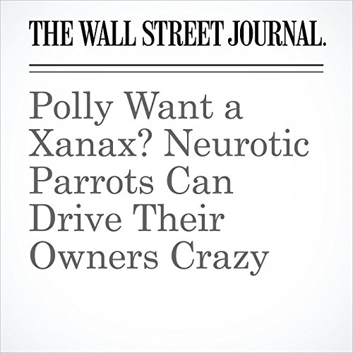 Polly Want a Xanax? Neurotic Parrots Can Drive Their Owners Crazy copertina