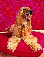 大人のためのZSCTWCLジグソーパズルおなかの上に横たわる500ピースのアフガンハウンド犬大人のパズル木製パズル500ピースのパズル知的減圧楽しい家族のパズル子供のためのゲーム大人