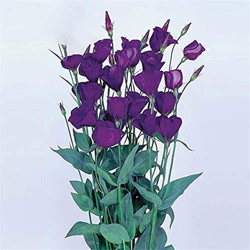 KEPTEI Samen - Eustoma/Lisianthus Samen Bonsai Pflanzensamen Blumensamen