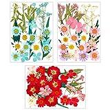 Friusate 96 unidades de flores prensadas, prensadas naturales, flores secas mixtas de flores secas para arte DIY, manualidades, fabricación, decoración de flores