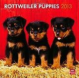 Der neue Rottweiler-Welpen Kalender für 2013 ist da! Sichern Sie sich jetzt ihr Angebot!