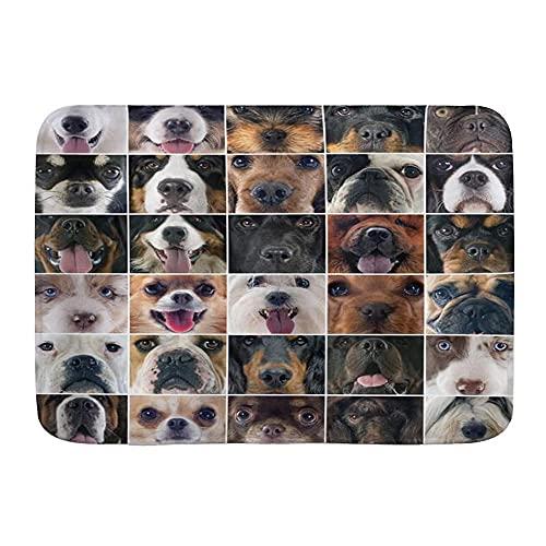 Alfombra de baño para baño, para perros, estudio, Chihuahua, Chow, Cocker Spaniel Poodle de pura raza pastorera, antideslizante, alfombra de área suave, felpa, decoración del hogar