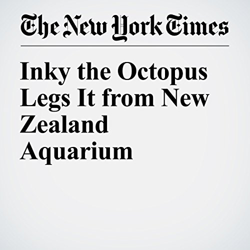 Inky the Octopus Legs It from New Zealand Aquarium cover art