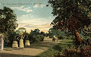 Cinnamon Gardens Colombo, Sri Lanka Original Vintage Postcard