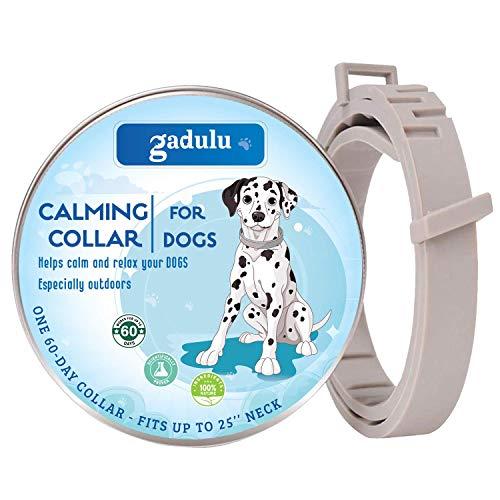 mDesign Hond Accessoires Opslag - Opbergdoos Met 4 vakken - Bestel Systeem voor Hond Accessoires Opslag - Handvat voor Vervoer - Transparant
