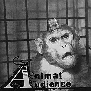 Animal Audience