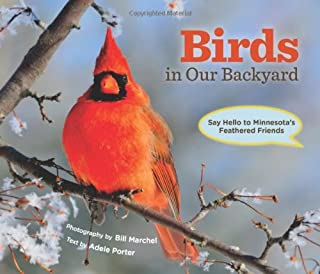 Birds in Our Backyard: Say Hello to Minnesota's Feathered Friends