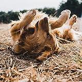 Smooth Sleepy Pups