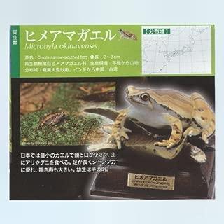 Kitan Club (KITAN CLUB) Nature Technicolor Japanese frog Hime tree frog Gachapon figure