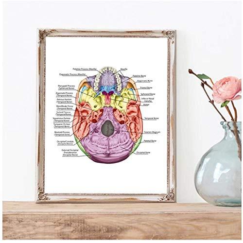 BINGJIACAI Los huesos del cráneo imprime cuadros de medicina carteles cabeza cráneo anatomía imagen lienzo pintura médico oficina arte de la pared decoración-40x50cm sin marco