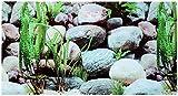 Rückwandfolie 250cm x 60 cm Rückwandposter für Aquarien