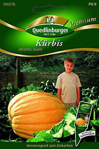 Kürbis Atlantic Giant - Cucurbita maxima duchesne QLB Premium Saatgut Kürbis