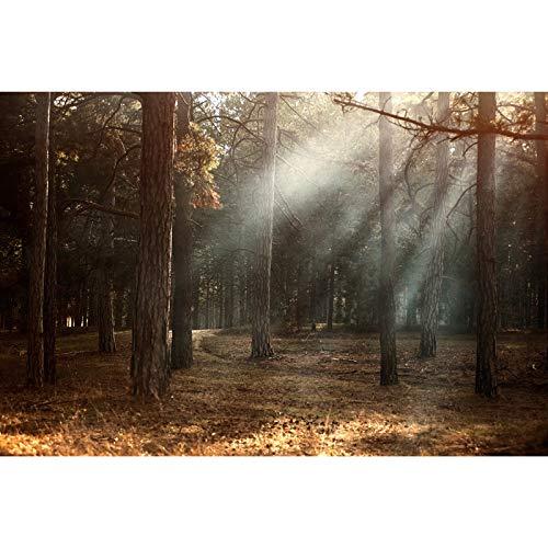 Bria Woodland Sunrise Sunshine Puzzle 500/1000/1500/2000/3000/4000/5000/2000/3000/4000/5000/6000 Puzzle de Jouet éducatif GießEnfants Enfants - 0221 (Color : A, Taglia: 3 000 pezzi
