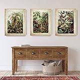 Eryan Ernst Haeckel Biologie Poster Drucke Palme Botanische