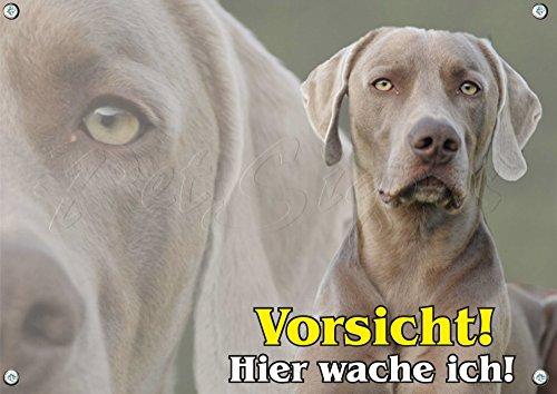 Petsigns Hundeschild - Weimaraner als Collage - 1,5 mm stabile Metallplatte - 1A Qualität, DIN A5