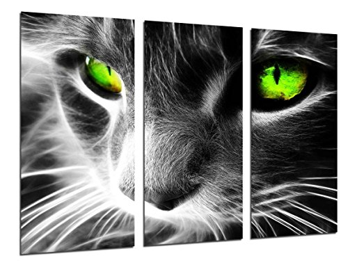 Cuadro Fotográfico Gato Ojos de Colores, Animales Tamaño total: 97 x 62 cm XXL, Multicolor