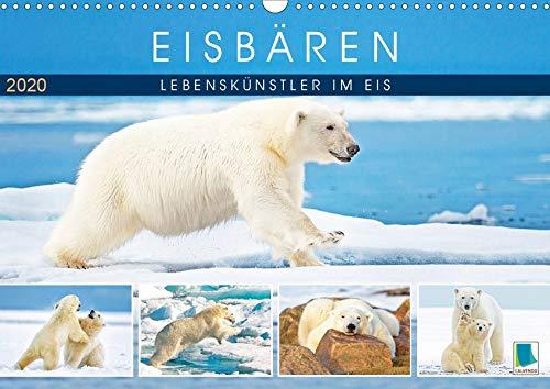 Eisbären: Lebenskünstler im Eis (Wandkalender 2020 DIN A3 quer): Eisbären: Faszination Polarbär (Monatskalender, 14 Seiten ) (CALVENDO Tiere)